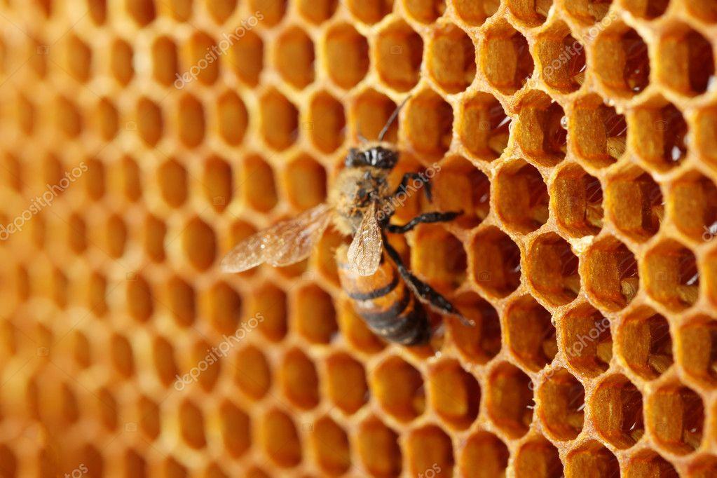 Общий рисунок на стене состоящий из нескольких панелей SOTI очень похож на пчелиные соты.
